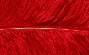 red bird feather pattern