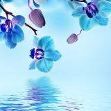 orchid flower blue background powerpoint